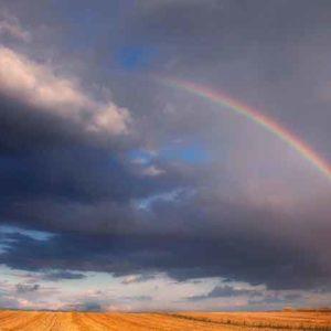 Half RainbowSM