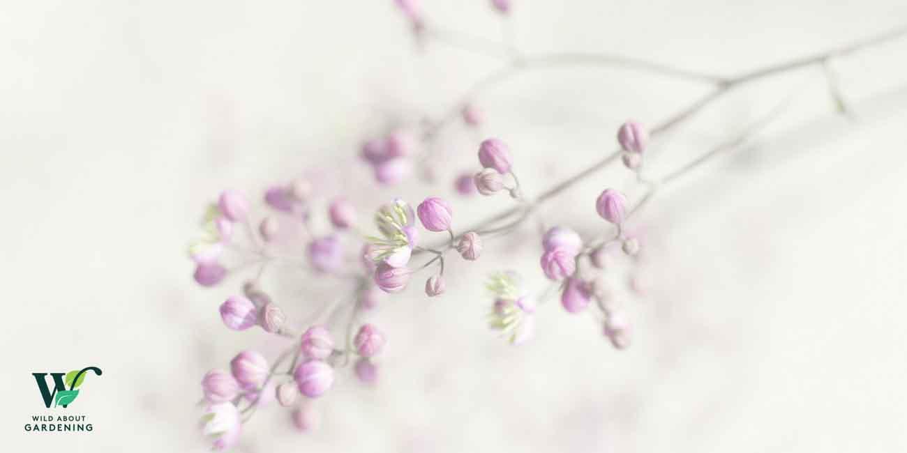 chachoo Portfolio | Wild About Gardening